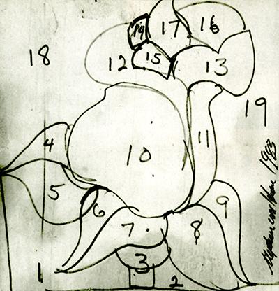 Skizze der Rose